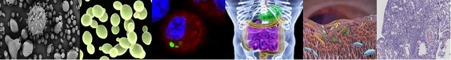 CIIL recherche Grippe immunité métabolisme