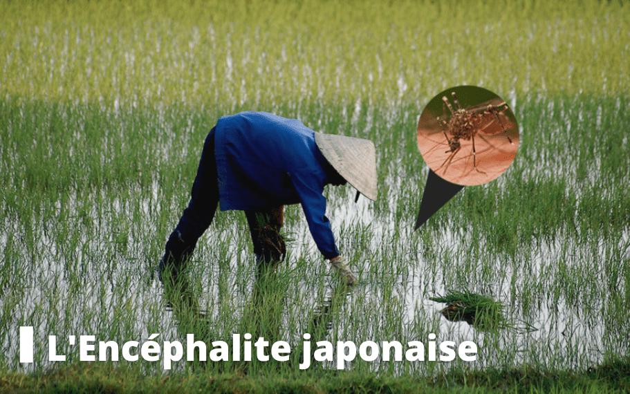 encéphalite japonaise voyage pasteur lille